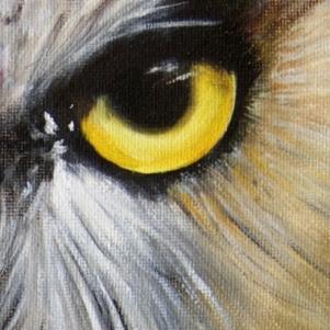 chouette-detail1
